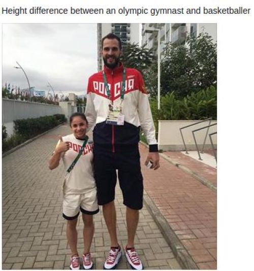 Height difference between an olympic gymnast and basketballer