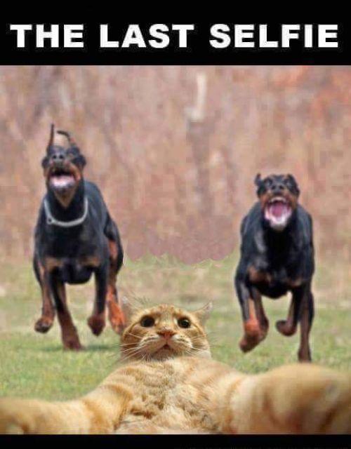 Funny Selfie Meme Images : Selfie memes that broke socialmedia recently