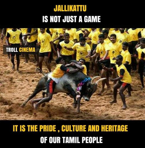 WE NEED OUR Jallikattu support memes